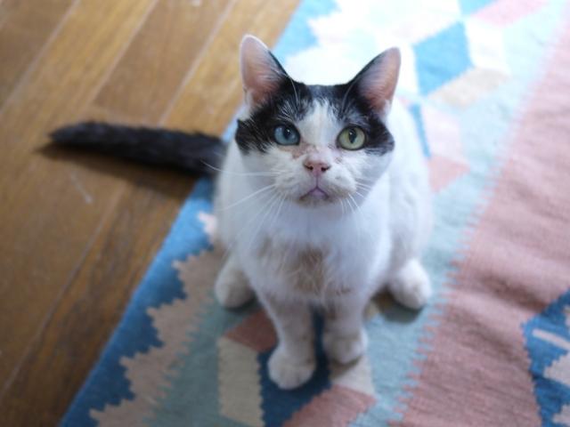 猫のお留守番 ヘキサちゃん編。_a0143140_23125404.jpg