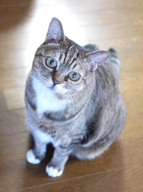 猫のお留守番 ヘプタちゃん編。_a0143140_23160781.jpg
