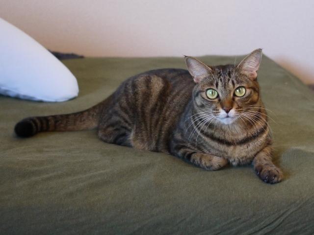 猫のお留守番 琥珀ちゃん編。_a0143140_23204462.jpg