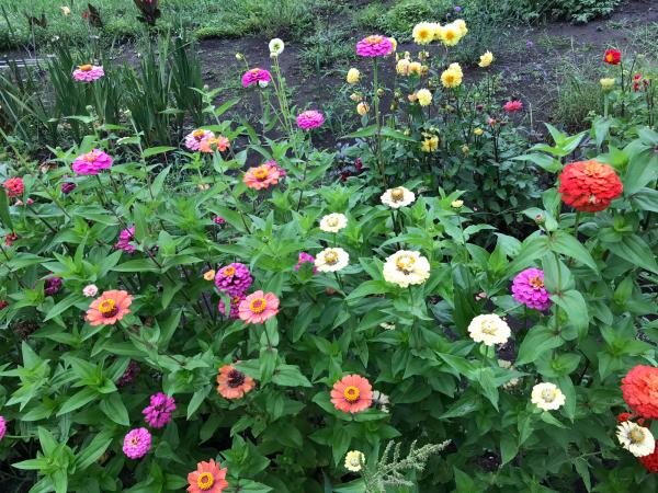 お墓参りと花壇の花_d0322040_21360818.jpg