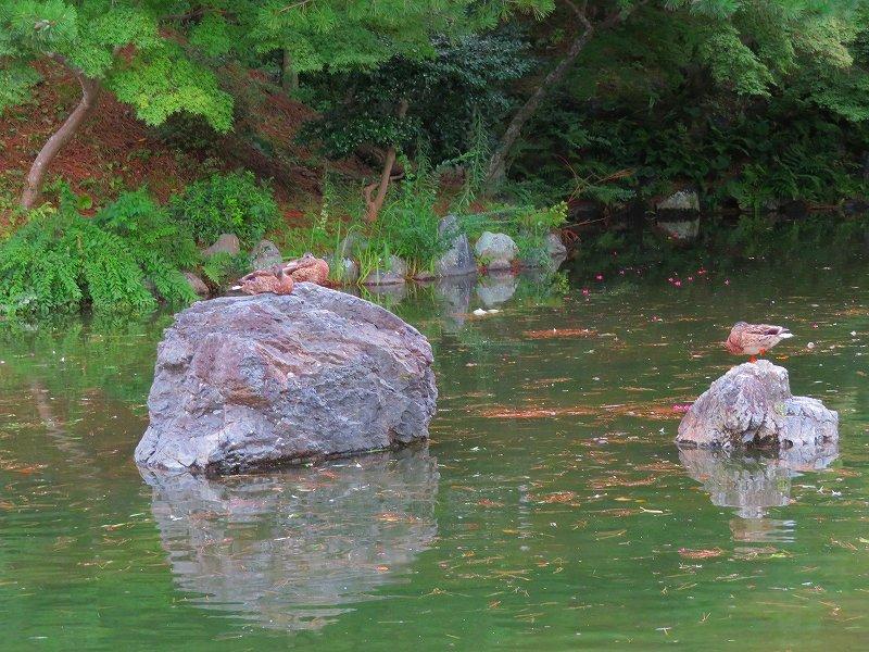 夏の京都「円山公園」20180824_e0237645_00155604.jpg