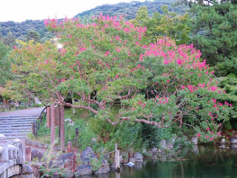 夏の京都「円山公園」20180824_e0237645_00155657.jpg