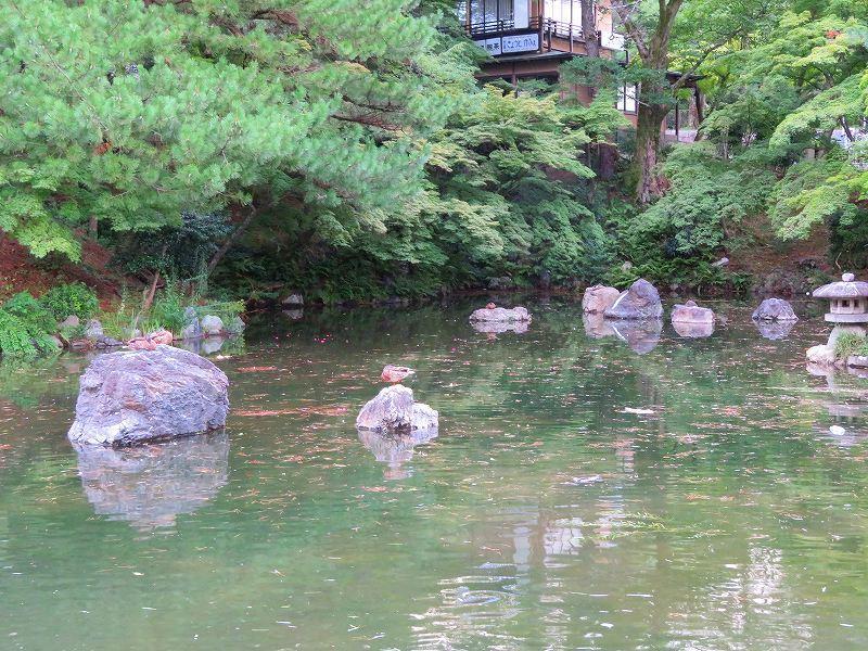 夏の京都「円山公園」20180824_e0237645_00155694.jpg