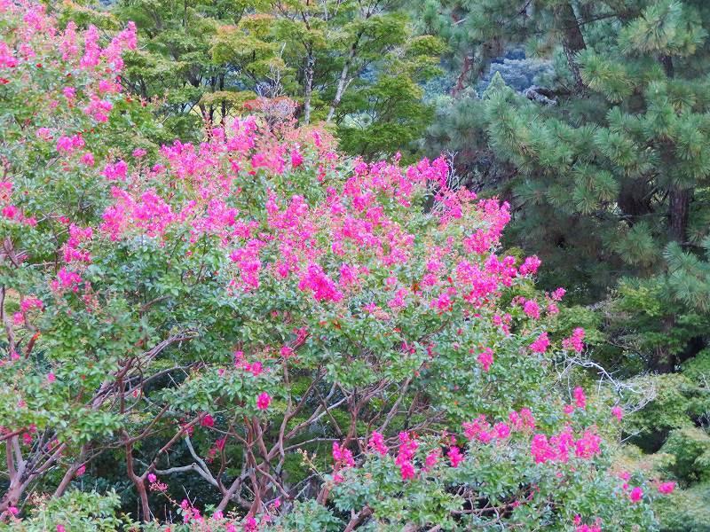 夏の京都「円山公園」20180824_e0237645_00155699.jpg