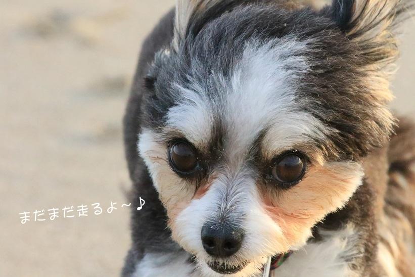 さよなら夏umi2018・Ⅳ (3人並んで~♪)_c0145250_09281791.jpg