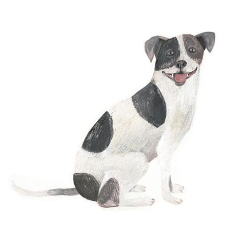 今日の絵「シロクロ犬」_a0138978_00095680.jpg