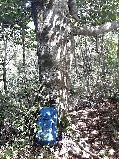 姉川支流矢谷から1110mピーク尾根下降_e0064783_20113185.jpg