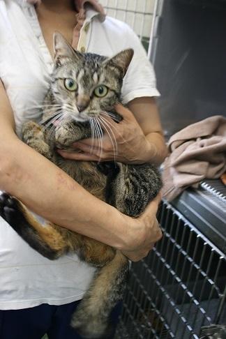 【猫・移動先募集】センター(支所)収容(8/26訪問)_f0242002_22465127.jpg
