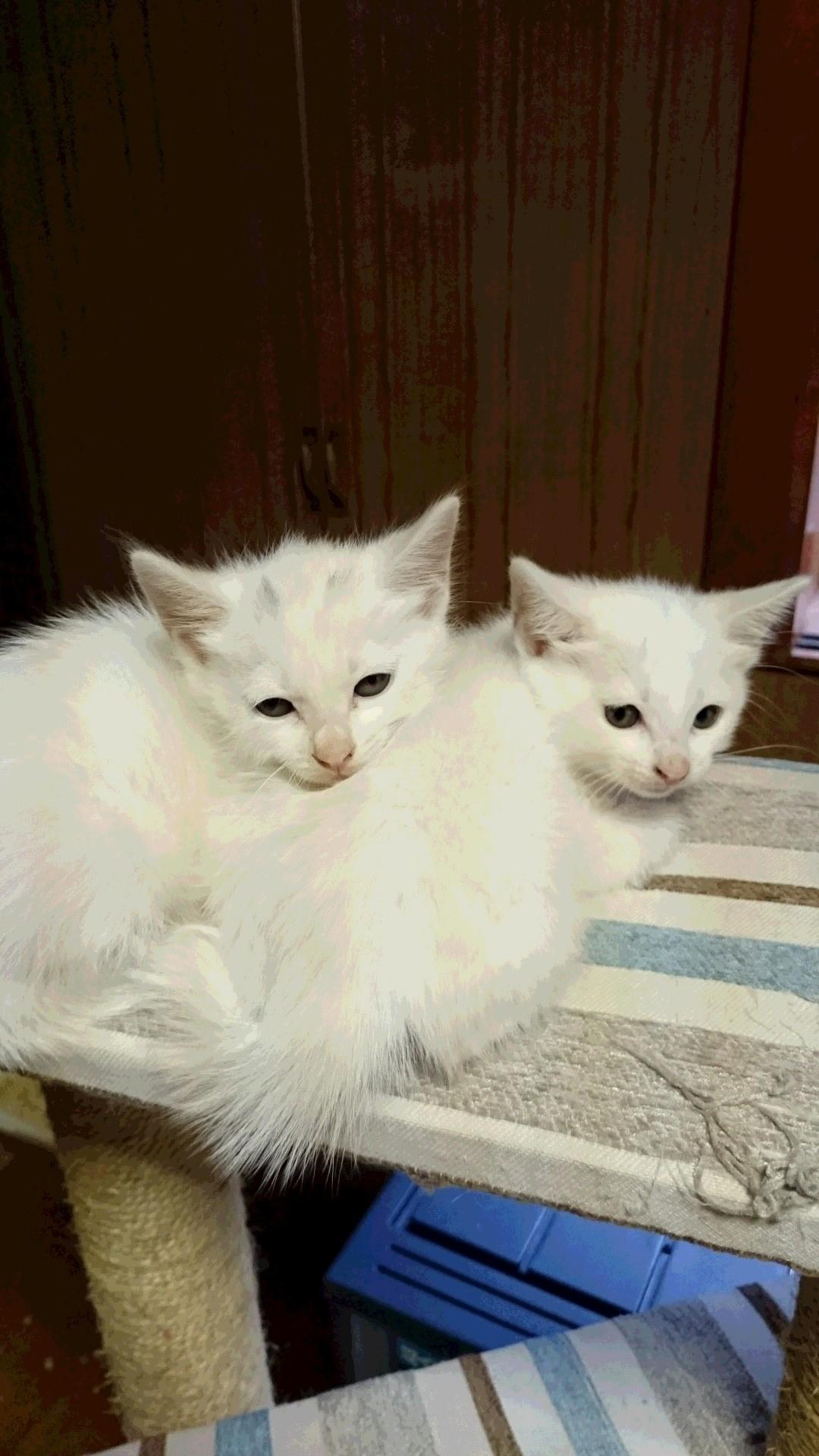 仔猫の初診_f0255704_11053826.jpg