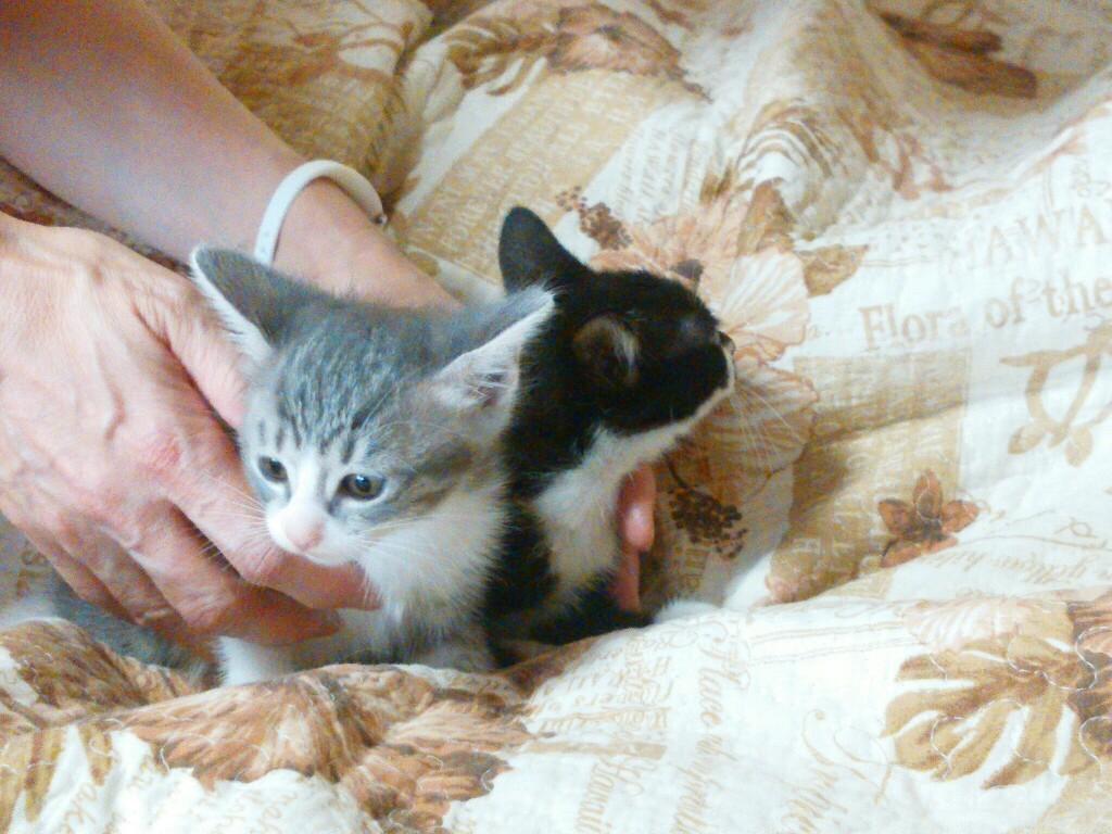 仔猫の初診_f0255704_11053827.jpg