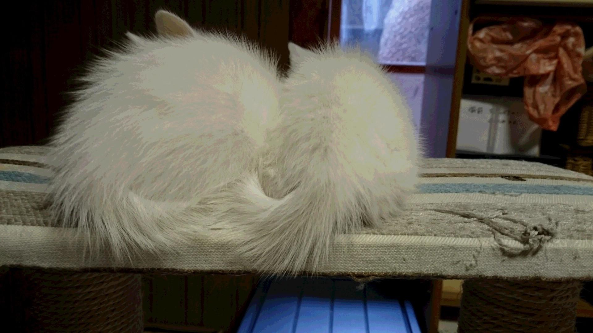 仔猫の初診_f0255704_18280738.jpg