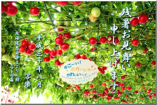 残暑見舞い_d0123528_15395584.jpg
