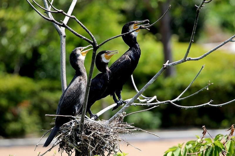 公園の鳥_f0327034_21342644.jpg