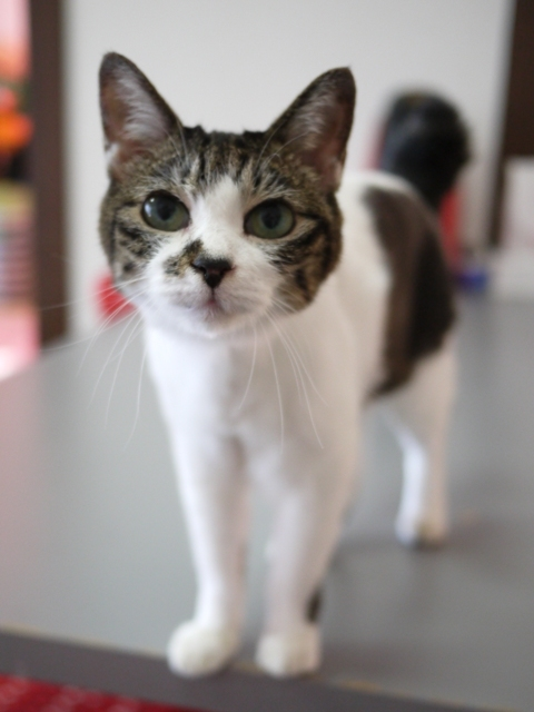 猫のお留守番 ピコちゃん編。_a0143140_22552807.jpg