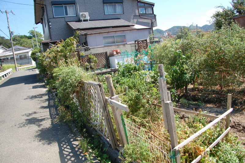 台風被害の片付け・・・我が家の畑_c0108460_15524547.jpg