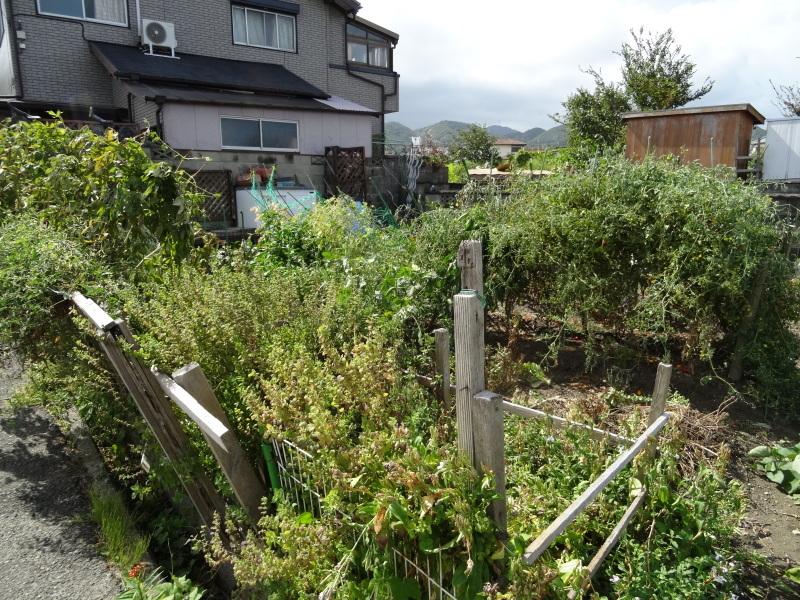 台風被害の片付け・・・我が家の畑_c0108460_15550553.jpg