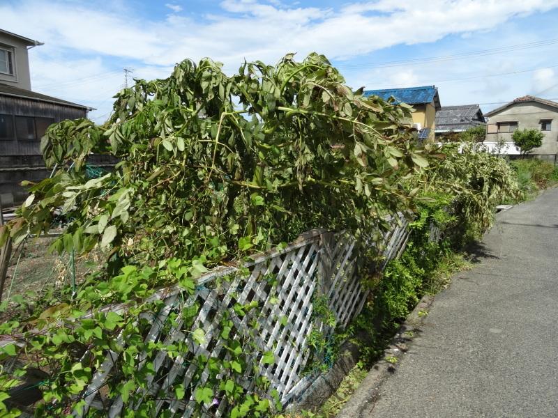 台風被害の片付け・・・我が家の畑_c0108460_15583454.jpg