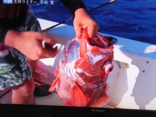 『情熱大陸』に出演の平坂寛さん_d0336460_10213236.jpg