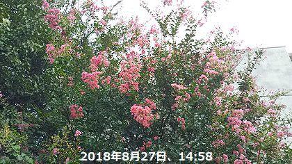 d0051601_14003866.jpg
