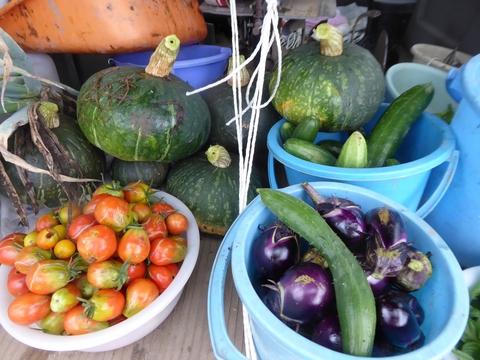 今日の収穫_e0087201_2145297.jpg