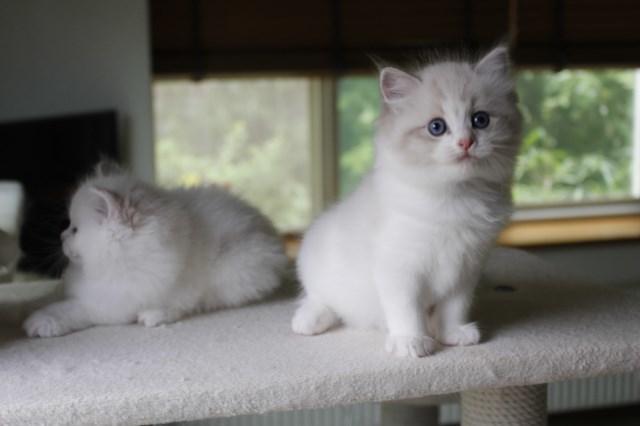 オーナー様募集中の仔猫達 レンちゃん_a0285571_18390441.jpg