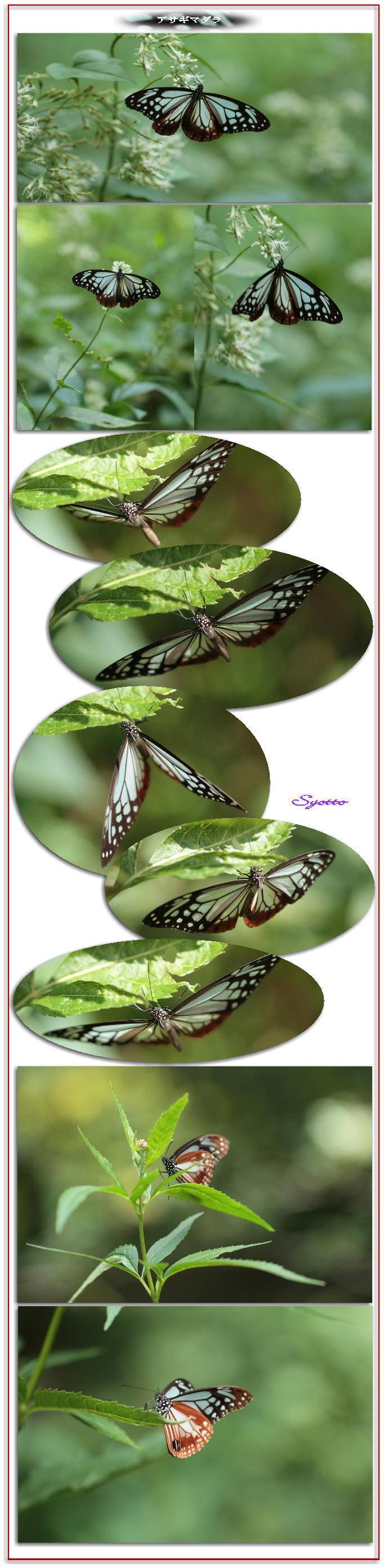 f0164592_20125061.jpg