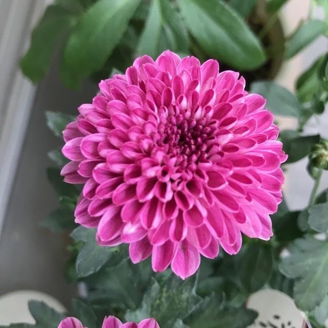 秋の花_f0204295_16084169.jpg