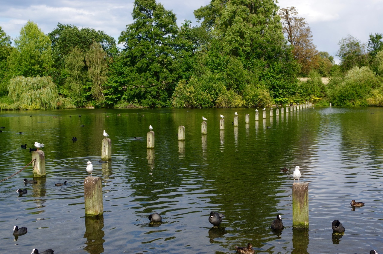 楽しみ盛りだくさん、土曜日のケンジントン・ガーデンズ_e0114020_17045967.jpg