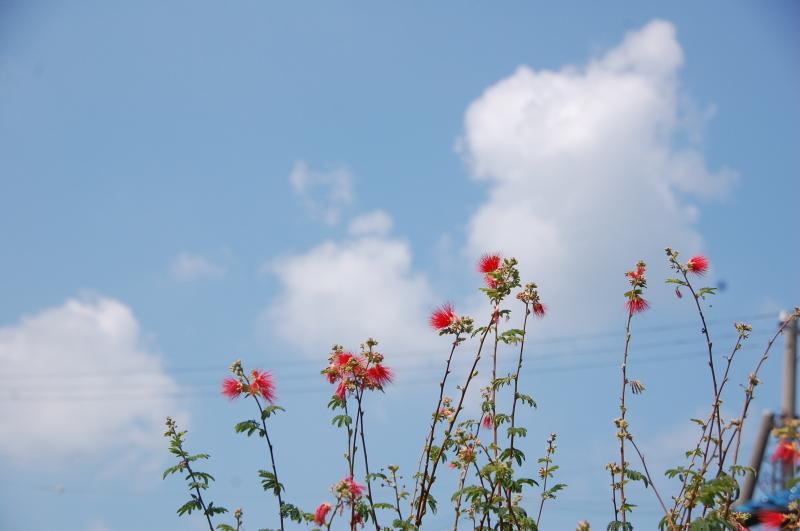我が家の畑も ぼちぼち片付け開始_c0108460_16424889.jpg