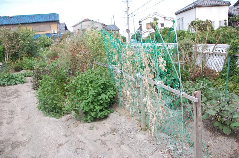 我が家の畑も ぼちぼち片付け開始_c0108460_16475047.jpg