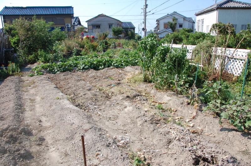 我が家の畑も ぼちぼち片付け開始_c0108460_16484306.jpg