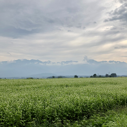 夏の八ヶ岳へ_b0183404_19332361.jpg