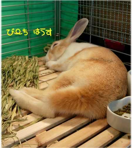 b0326613_00111352.jpg