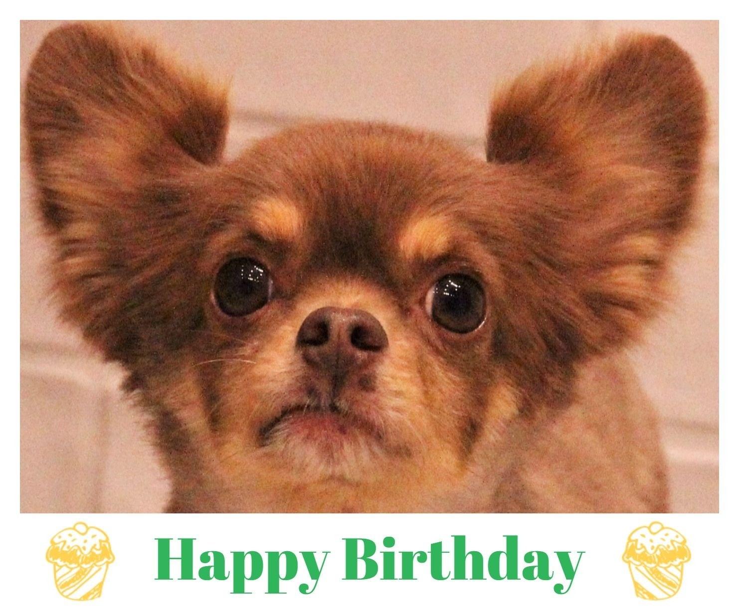 Happy Birthday ♡ トラジロウくん_d0060413_13355875.jpg