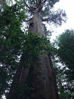 高森のパワースポットに行ってきました。_e0184224_09415595.jpg