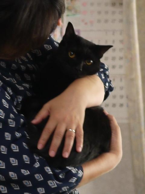 猫のお留守番 やまとくん編。_a0143140_21555996.jpg