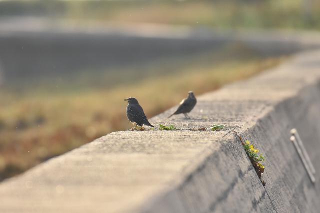鳥取全中番外編_b0249247_00555659.jpg