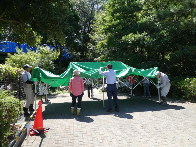 イベントの準備:テント張り・・・うみべの森_c0108460_16483055.jpg