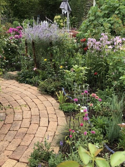8月末の庭「バラ`ラ・フランス'が綺麗に咲いています」_a0243064_11501745.jpg