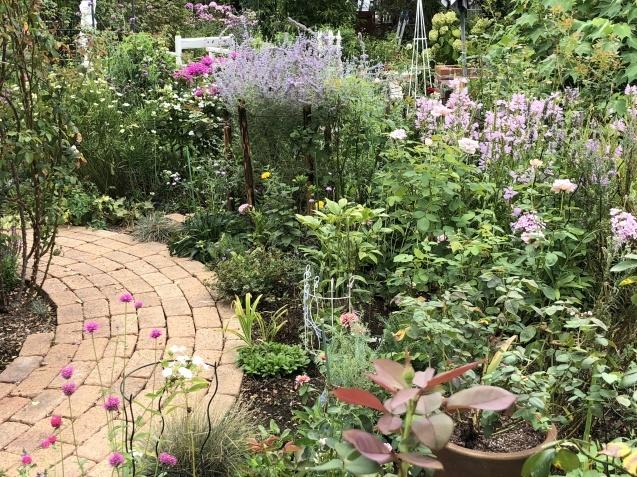 8月末の庭「バラ`ラ・フランス'が綺麗に咲いています」_a0243064_11503856.jpg