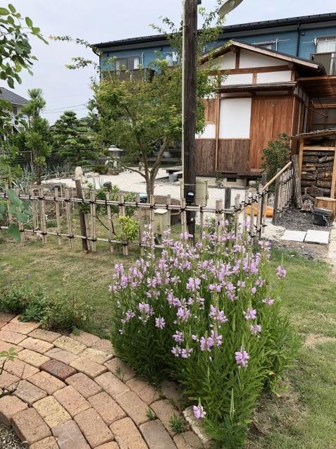8月末の庭「バラ`ラ・フランス'が綺麗に咲いています」_a0243064_11571634.jpg