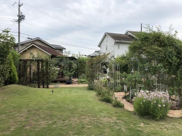 8月末の庭「バラ`ラ・フランス'が綺麗に咲いています」_a0243064_11584067.jpg