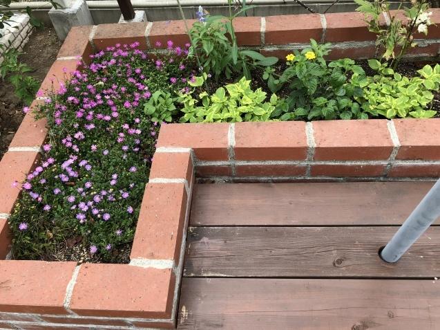 8月末の庭「バラ`ラ・フランス'が綺麗に咲いています」_a0243064_11593174.jpg