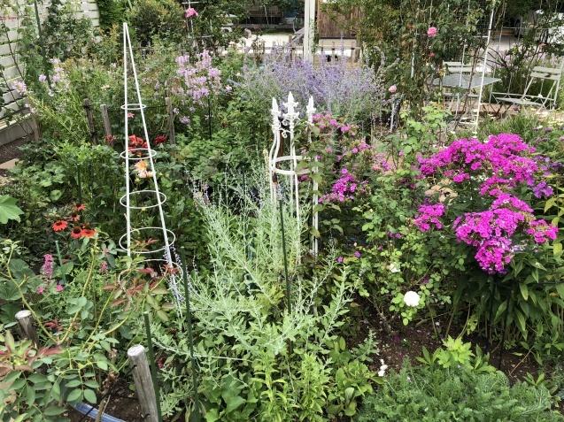 8月末の庭「バラ`ラ・フランス'が綺麗に咲いています」_a0243064_11594918.jpg