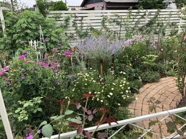 8月末の庭「バラ`ラ・フランス'が綺麗に咲いています」_a0243064_12001741.jpg