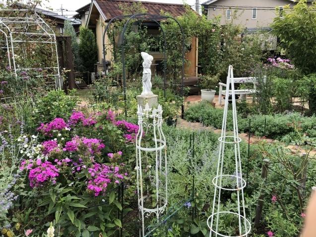 8月末の庭「バラ`ラ・フランス'が綺麗に咲いています」_a0243064_12003929.jpg