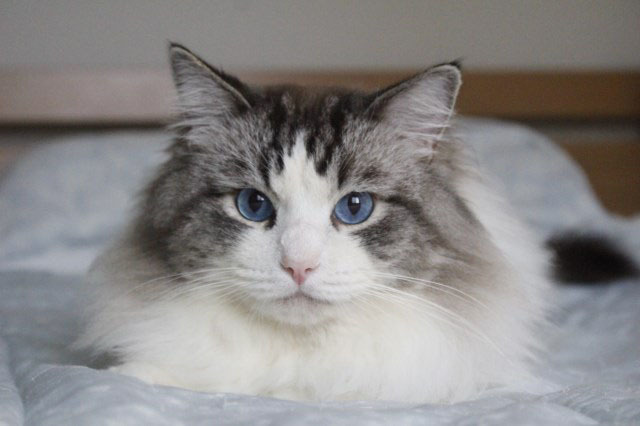 今日の仔猫達  モナちゃん_a0285571_22540809.jpg