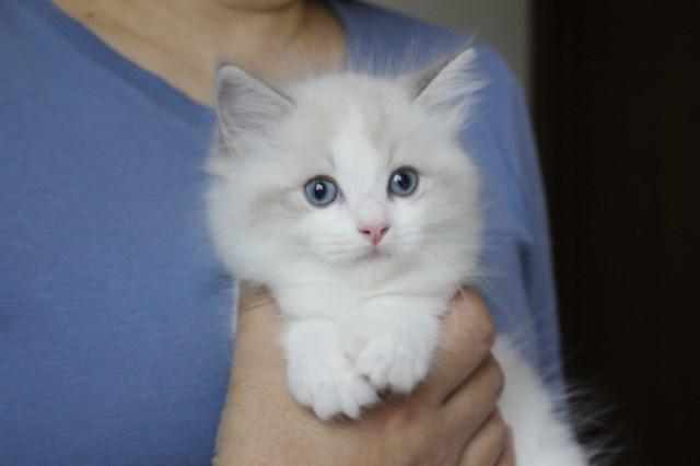今日の仔猫達  モナちゃん_a0285571_22541805.jpg