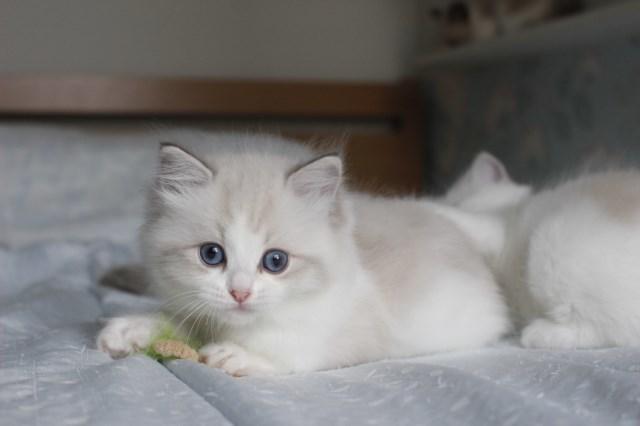 今日の仔猫達  モナちゃん_a0285571_22542274.jpg