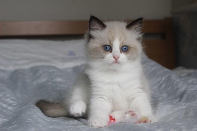 今日の仔猫達  モナちゃん_a0285571_22543424.jpg